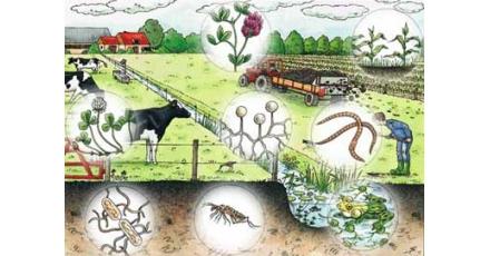 Biodiverstiteit: meer dan 'natuur' en 'groen' alleen