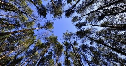 Circulair ondernemen en innovatie in hout
