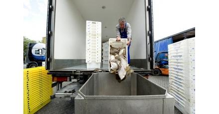 Tapijttegelproducent betrekt duurzaam gas van zeevisgroothandel