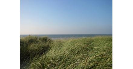 Duinen voor Almere