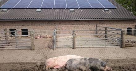 Eerste stroomneutrale stadsboerderij bespaart 36.600 kWh