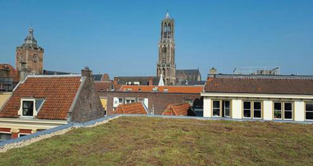 Extra subsidie voor groene daken in Utrecht