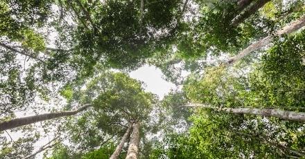 Gebruik FSC-gecertificeerd hout vertienvoudigd