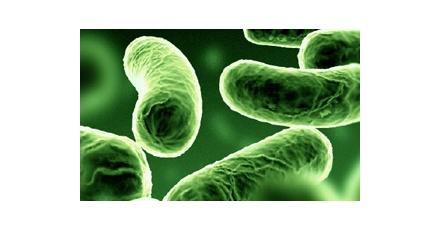 Gemeenten blij met bodembacterie