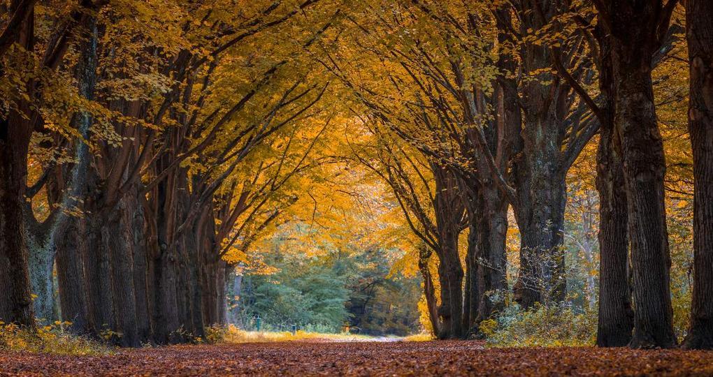 Impuls voor beter bosbeheer