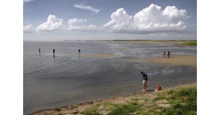 Klimaatadaptatie deel 4: Waddenzee