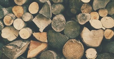Nieuwe houtfederatie pleit voor duurzaam geproduceerd hout