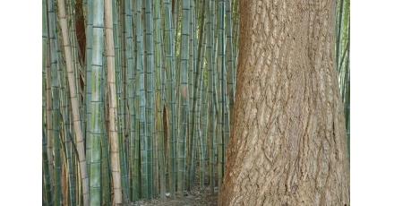 Onderzoek noemt oplossing voor ontbossingsprobleem