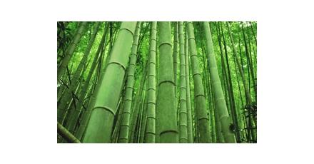 Ontwerpers aan de bamboe