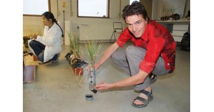 Plantje + bacterie = elektriciteit