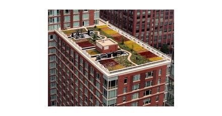 Rotterdam geeft subsidie voor 'groene daken'