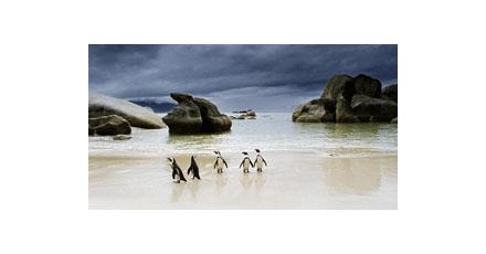 Vertwijfelde pinguins