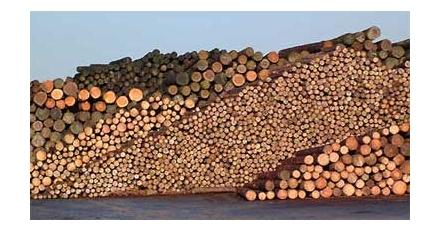 Woodchallenge 2009