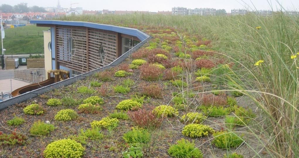 Zo benutten we groen optimaal voor onze leefomgeving