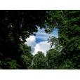 Uitbreiding criteria Forest50